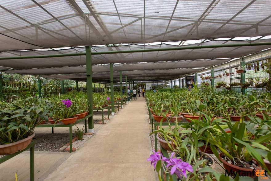 things to do in cartago, Costa Rica - Lankester Gardens