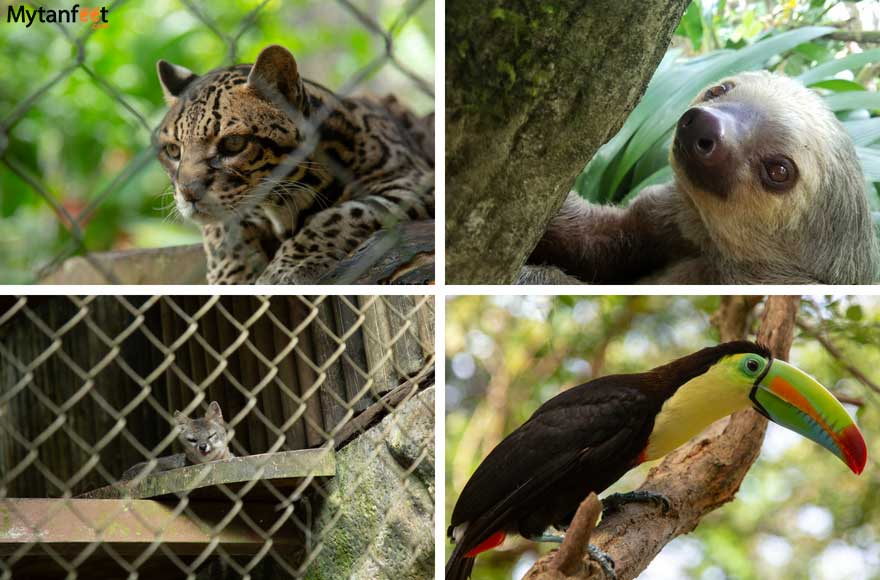 Arenal Springs Resort and Spa and Club Rio Costa Rica - Wildlife Sanctuary