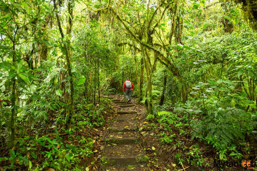 Santa Elena Cloud Forest Reserve trails