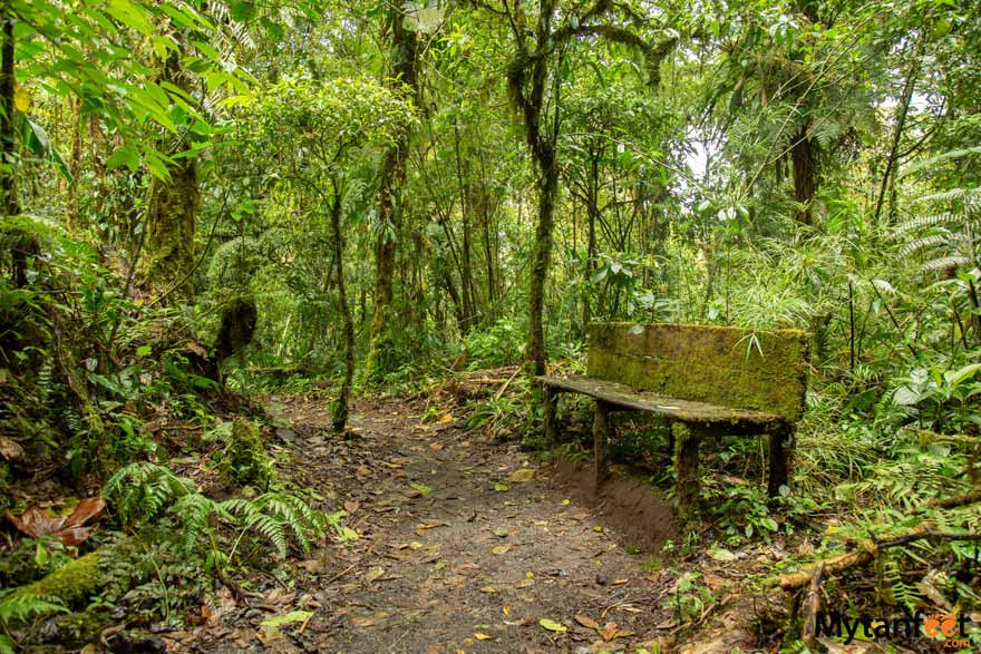 Santa Elena cloud forest benches