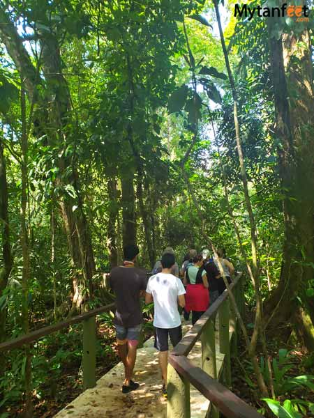 Tortuguero packages - Pachira nature walk