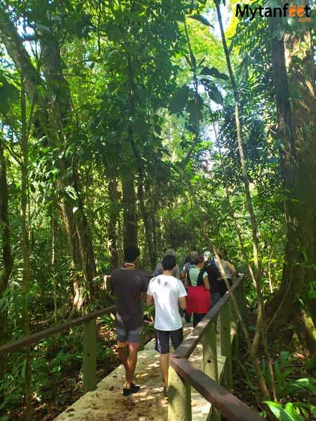 Tortuguero packages - Pachira nature walk