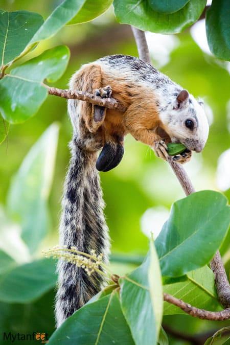 Costa rica wildlife - squirrel