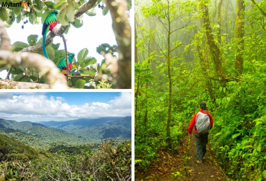 1 month Costa Rica road trip itinerary - monteverde cloud forests