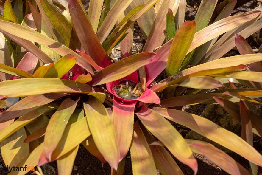 Lankester Botanical Garden flowers