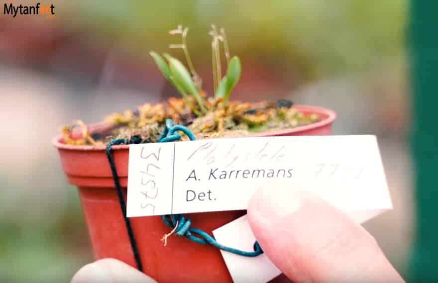 Lankester Botanical Garden smallest orchid