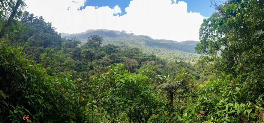 view of the rainforest and Tenorio Volcano