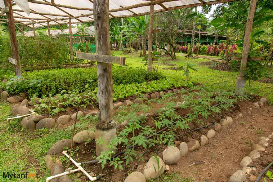Hacienda Pozo Azul organic garden