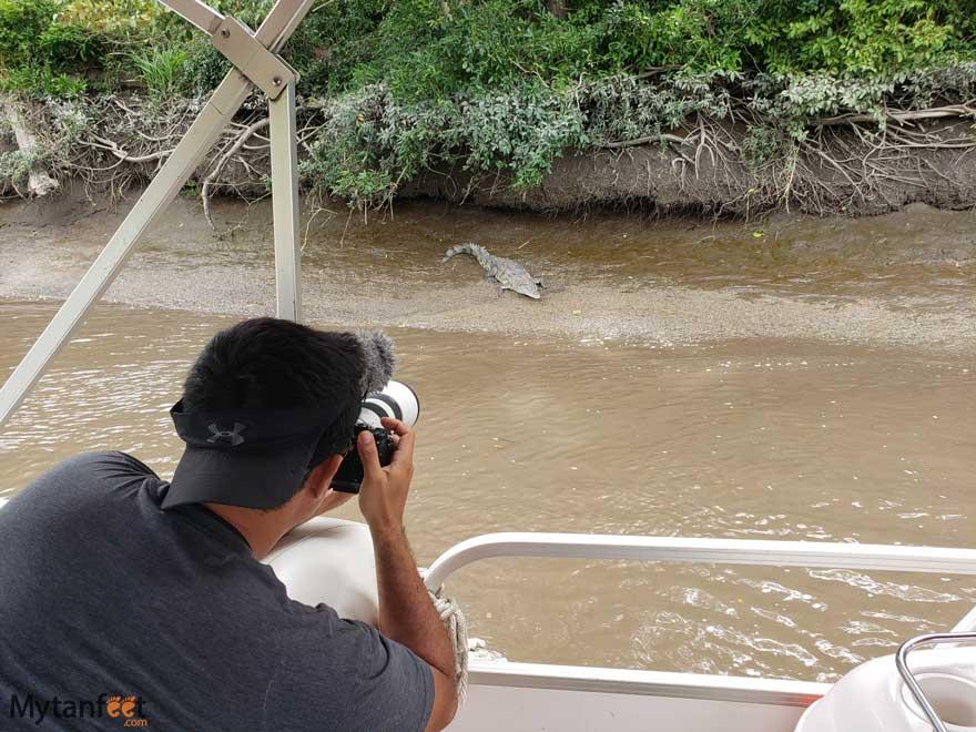 crocodile at El Viejo