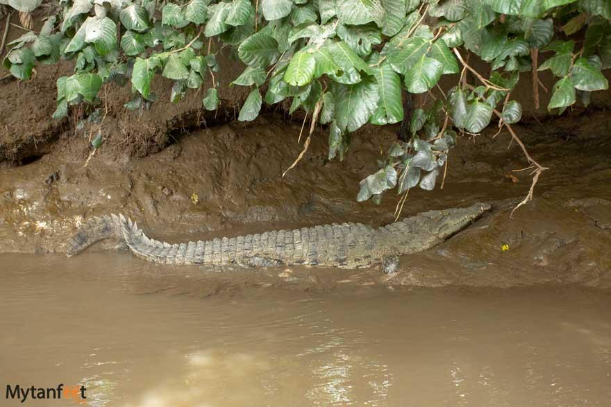 El Viejo boat tour crocodile