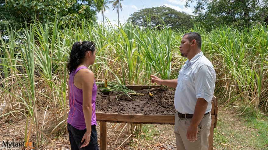 Rum tour at Hacienda El Viejo