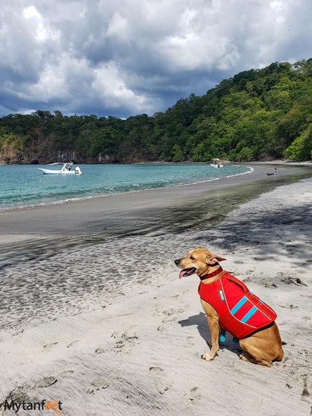 our dog enjoying the beach!