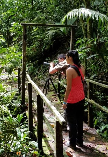 guided nature walk in sarapiqui