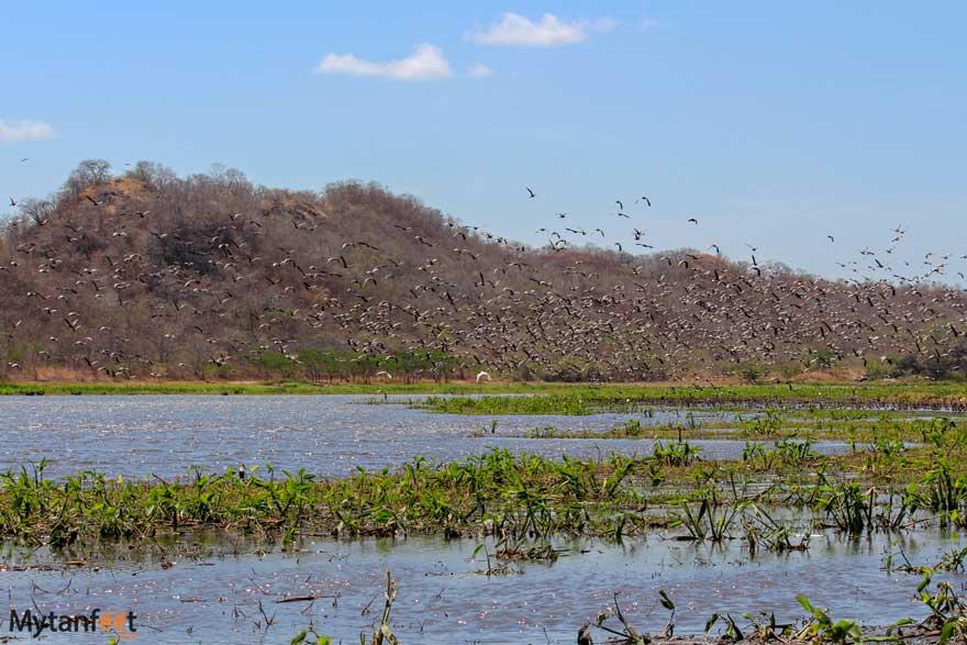 Migratory birds at Hacienda El Viejo