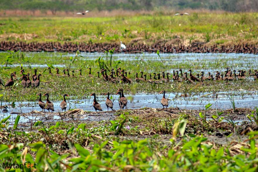 birds at Hacienda El Viejo