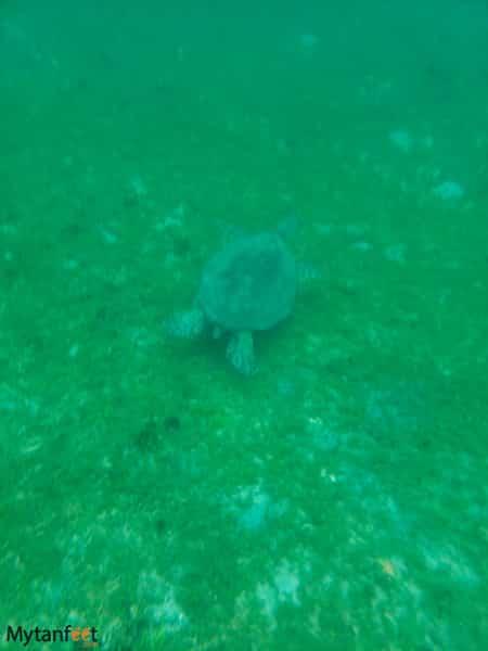 Bat Islands turtle