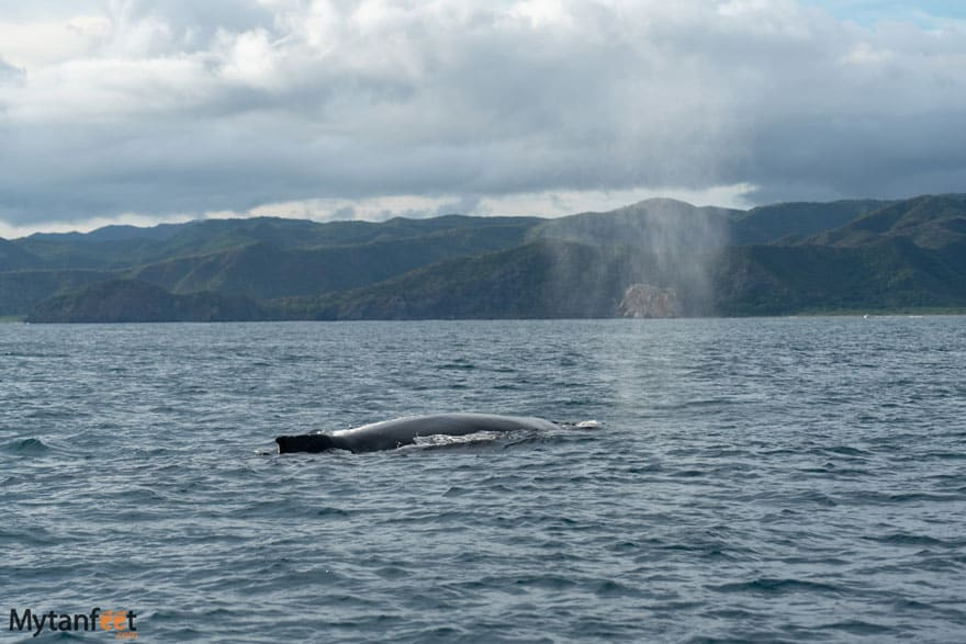 bat islands humpback whale witchs rock