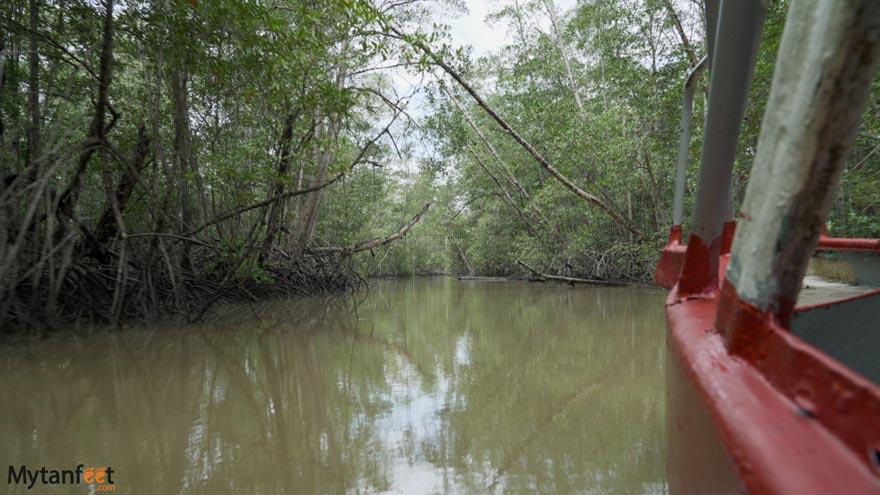 Damas-Island-Mangrove-boat-tour-white-ibis