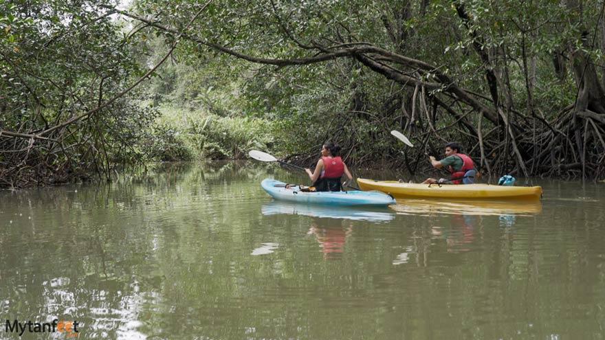 Damas Island mangrove kayak tour