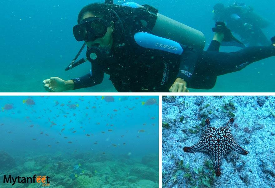 Costa Rica discovery dive
