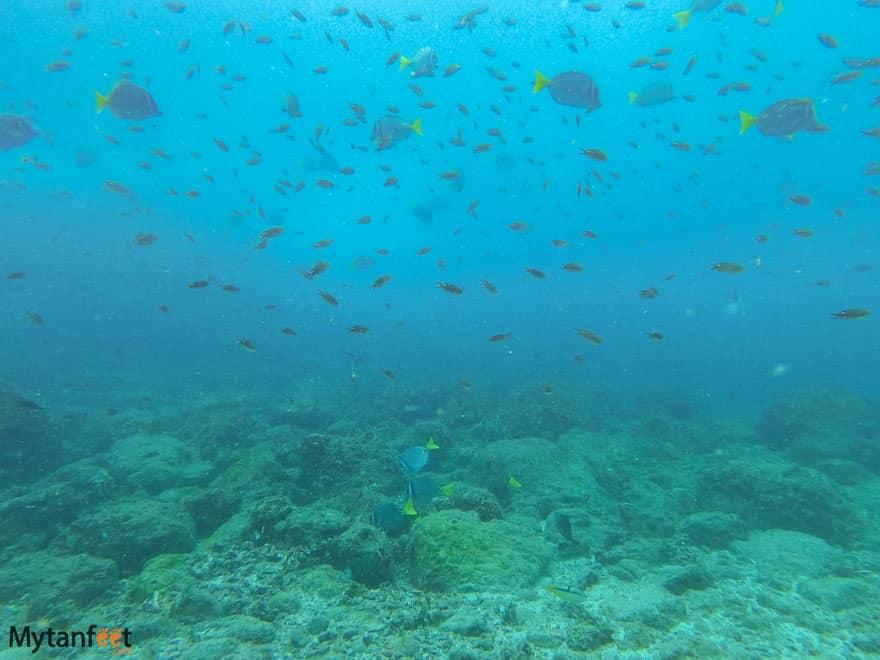 Scuba diving catalinas