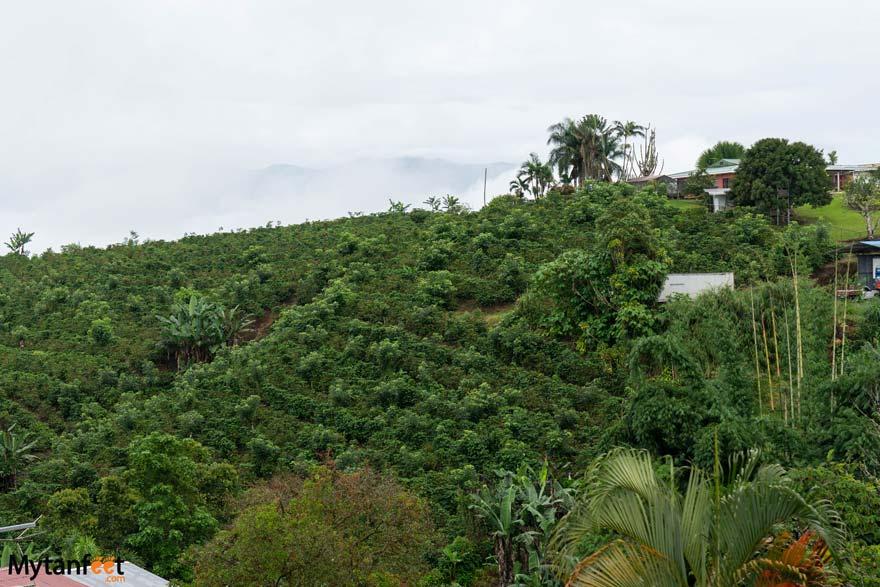 Local coffee farms in Costa Rica