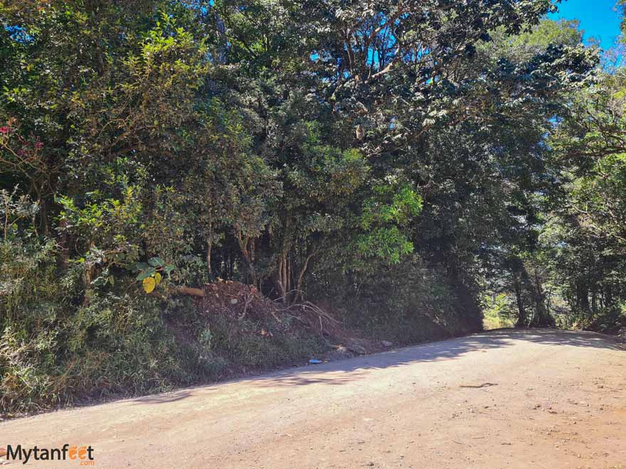 Climbing Monteverde ficus tree how to get there