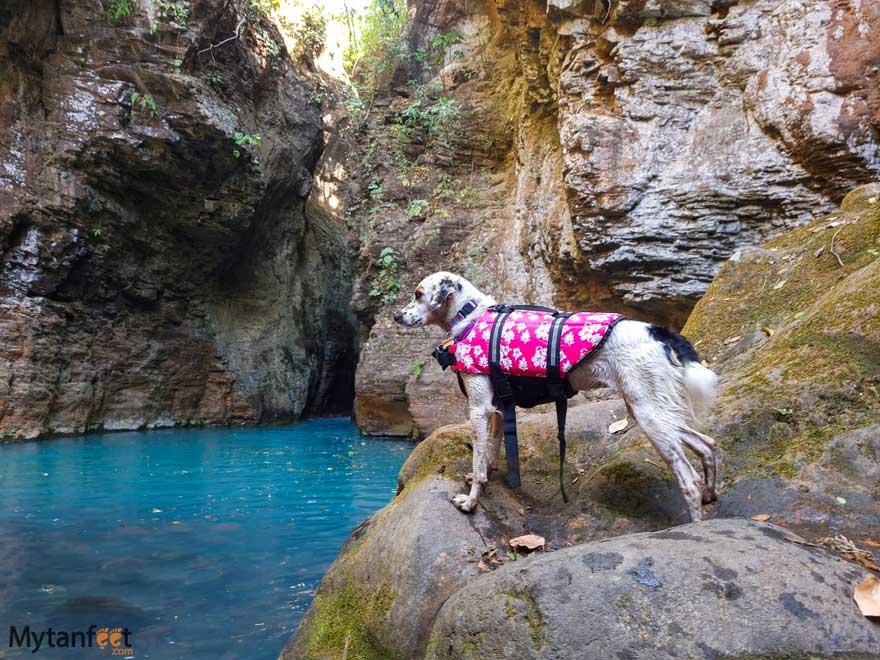 dog friendly swimming