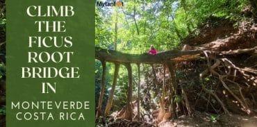 monteverde ficus root bridge featured