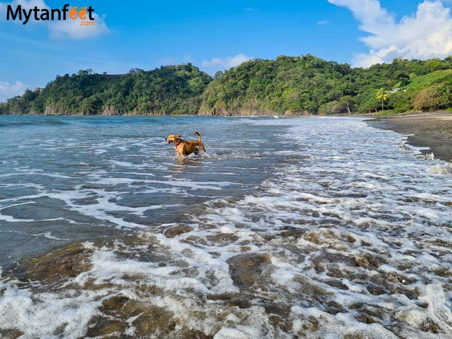 Costa Rica Patacon at the beach