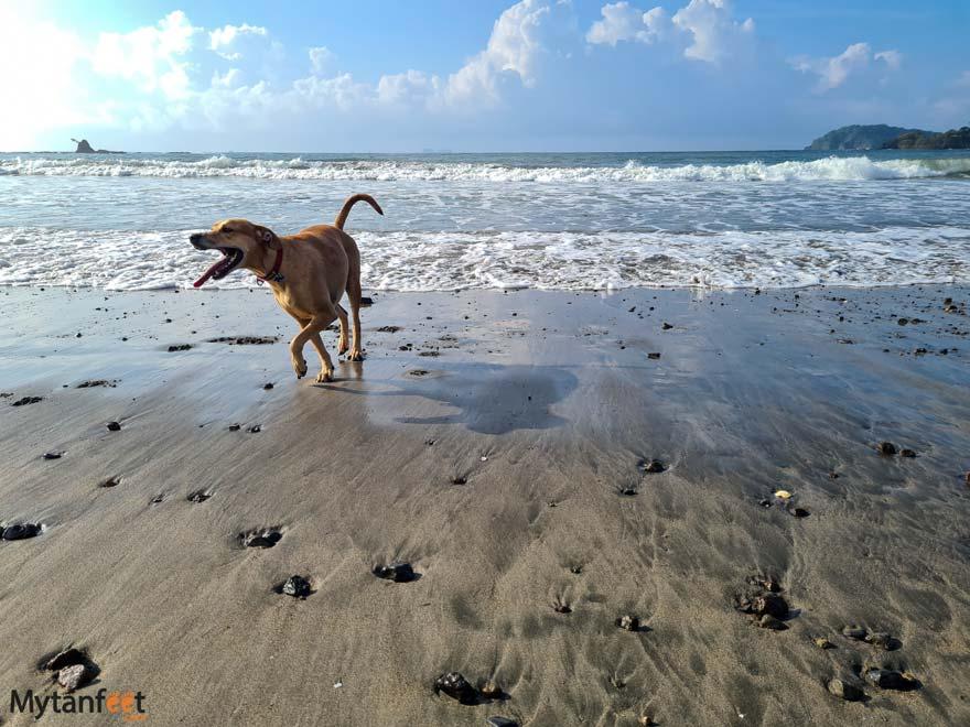 playa punta de pelencho dogs