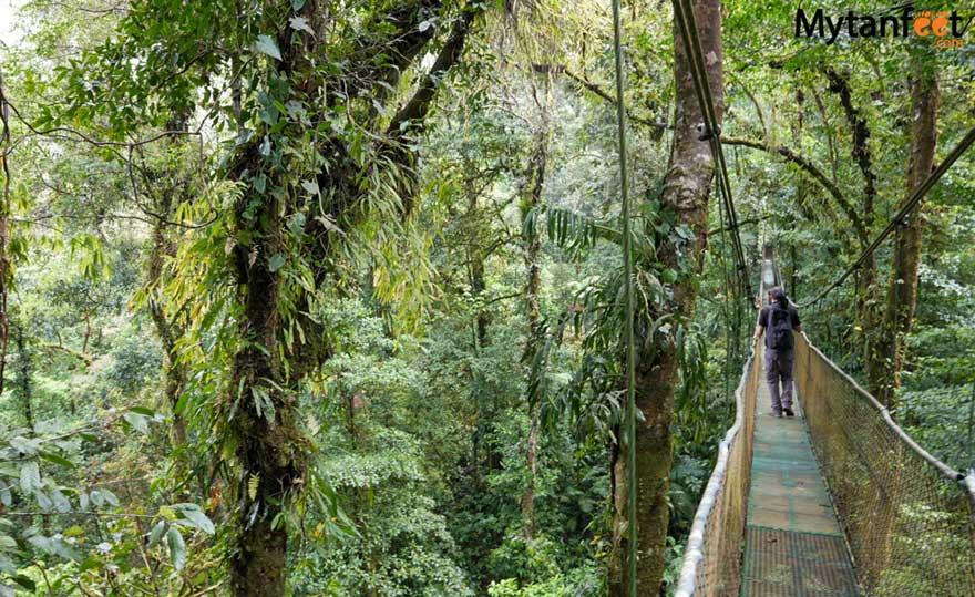 Guanacaste rainforest sloth tour -  heliconias rainforest hanging bridges