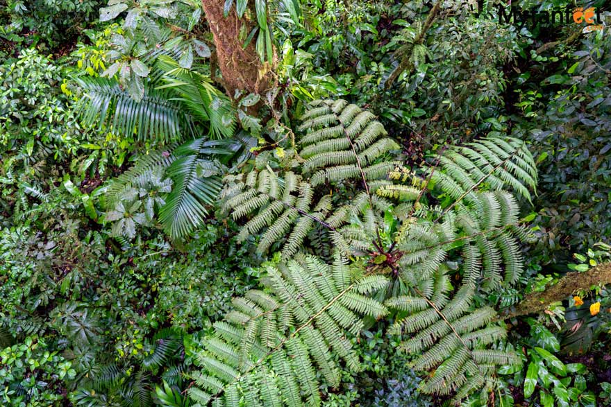 heliconias rainforest reserve