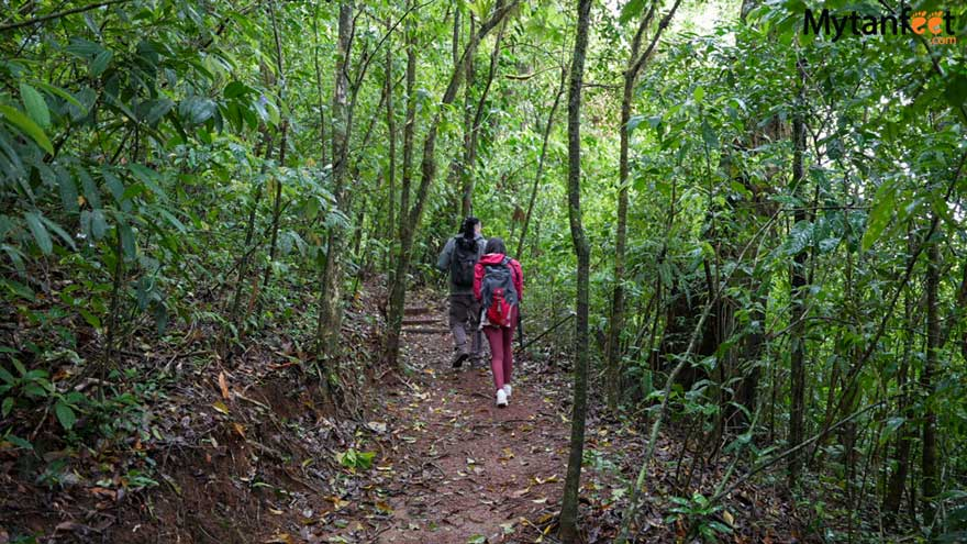 Guanacaste rainforest sloth tour - heliconias hanging bridges reserve