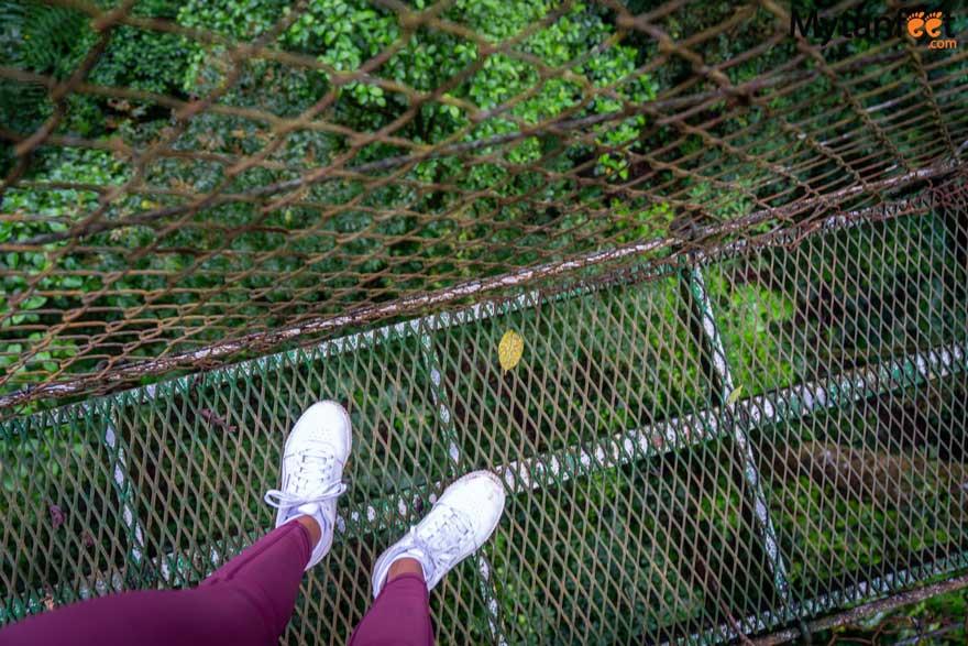 Guanacaste rainforest sloth tour -  heliconias hanging bridges