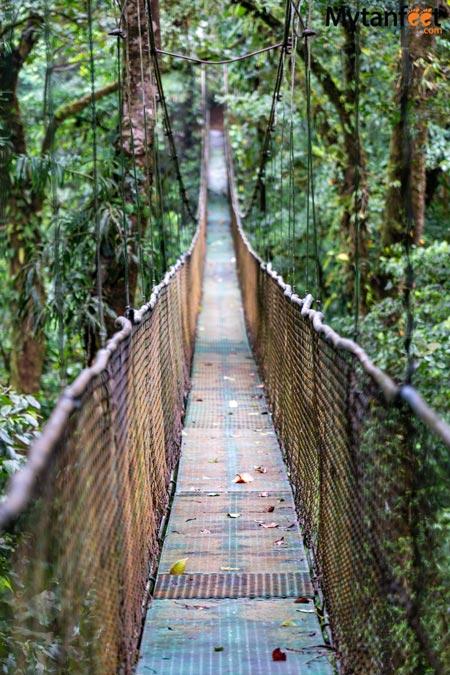 Guanacaste rainforest sloth tour - - heliconias rainforest reserve