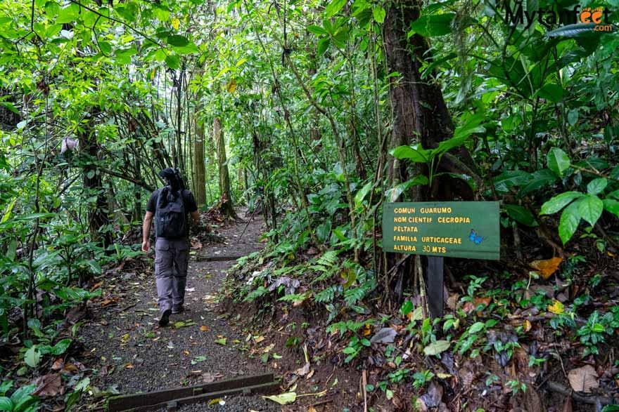 Guanacaste rainforest sloth tour - heliconias trail
