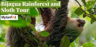 bijagua rainforest sloth tour featured