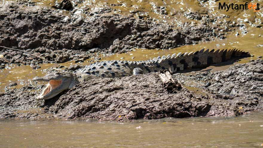 Palo Verde boat tour crocodile