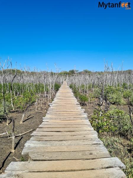 The mangrove bridge in Avellana