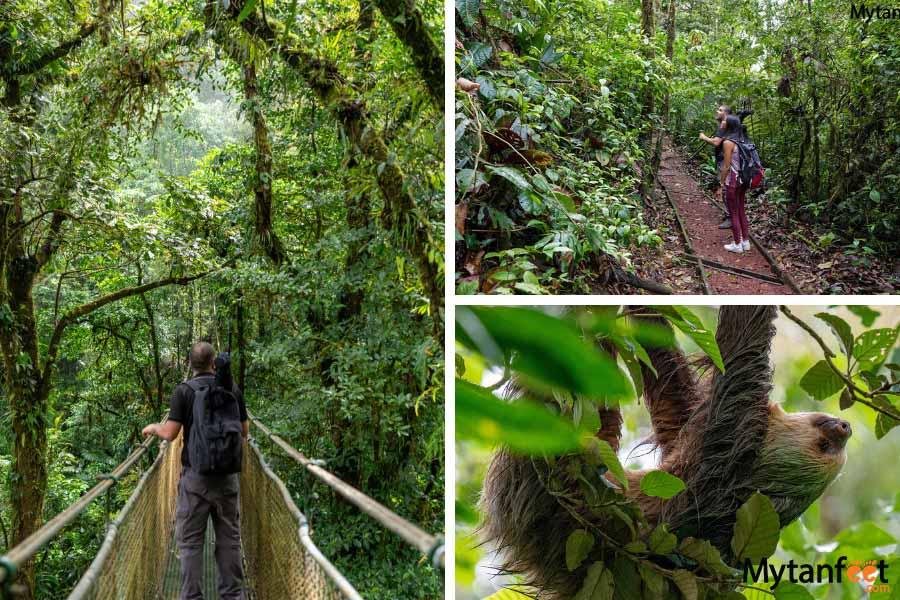bijagua rainforest sloth - tamarindo day trips